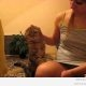 Viisakas kass küsib pai (video)