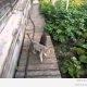 Maailma laisem kass (video)