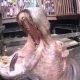 Hüpnotiseeriv video – jõehobud pistavad nahka terve arbuusi
