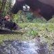 Sa ei saa end peita koera lõhnataju eest – politseikoer leiab mudaaugust päti üles