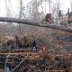 Orangutang hakkab vastu metsa hävitavale ekskavaatorile