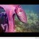 Kaheksajalg varastab kaamera ja põgeneb (video)