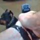 Kehakaamera jäädvustab hetke, kui politseinik laseb rotveilerit