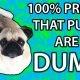 100% tõestus, et mopsid on lollid nagu lauajalad