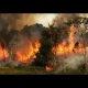 Amazoni vihmamets on põlenud juba mitu nädalat ja keegi ei võta mitte midagi ette